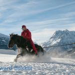 ski jøring with Icelandic horse in the Alps