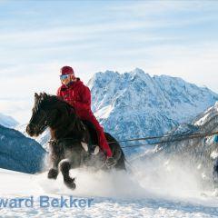ski joring ijslandse paarden zwitserland
